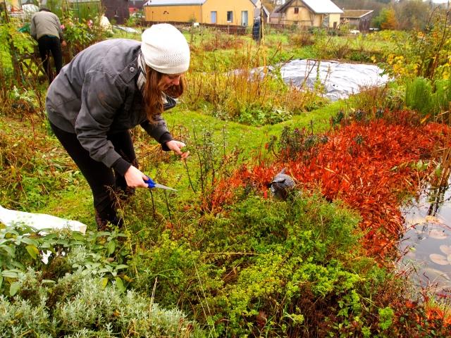 Picking some herbs